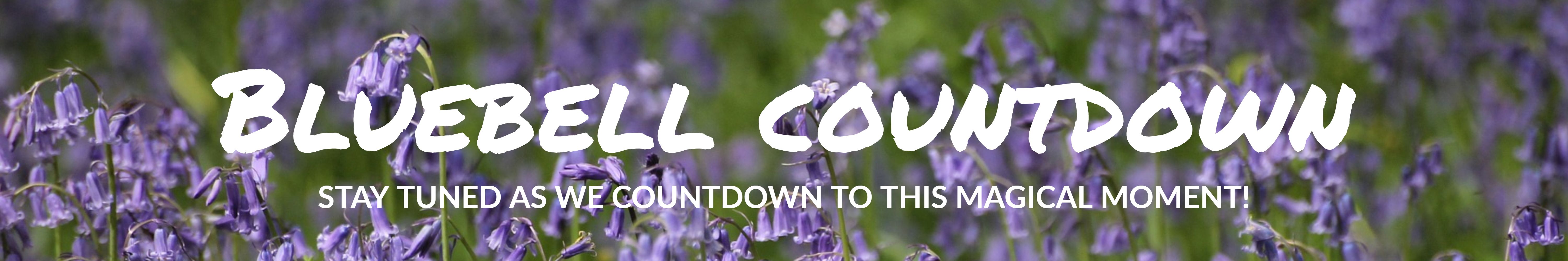 bluebell countdown