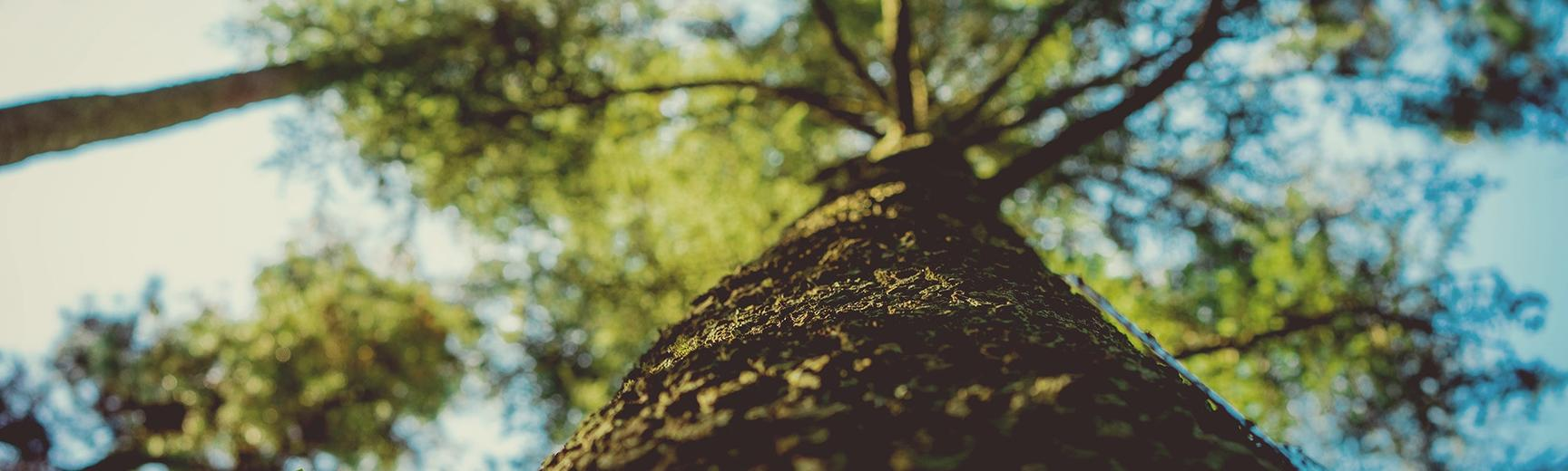tree climbing - irene davila 45779 unsplash