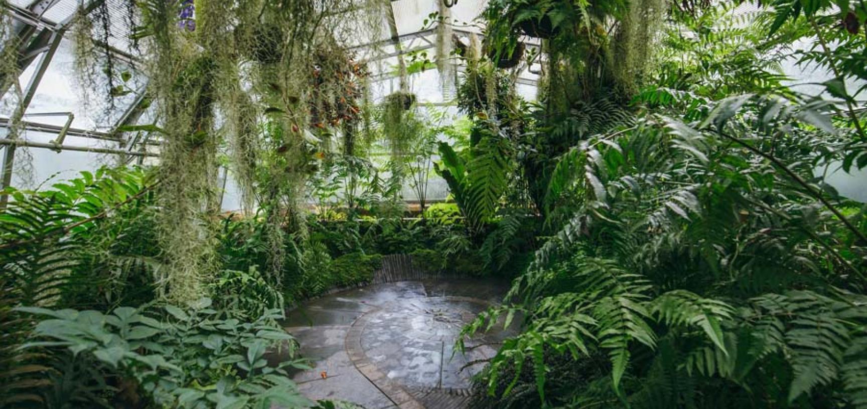 botanicgardensbyianwallman 3530