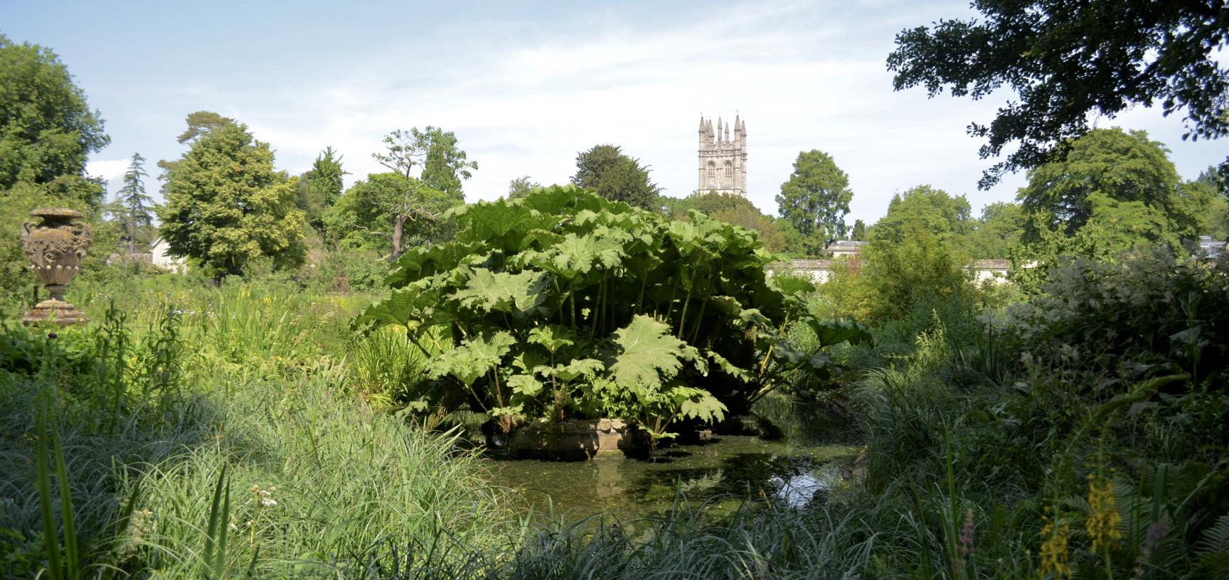 The Bog Garden and Magdalen Tower