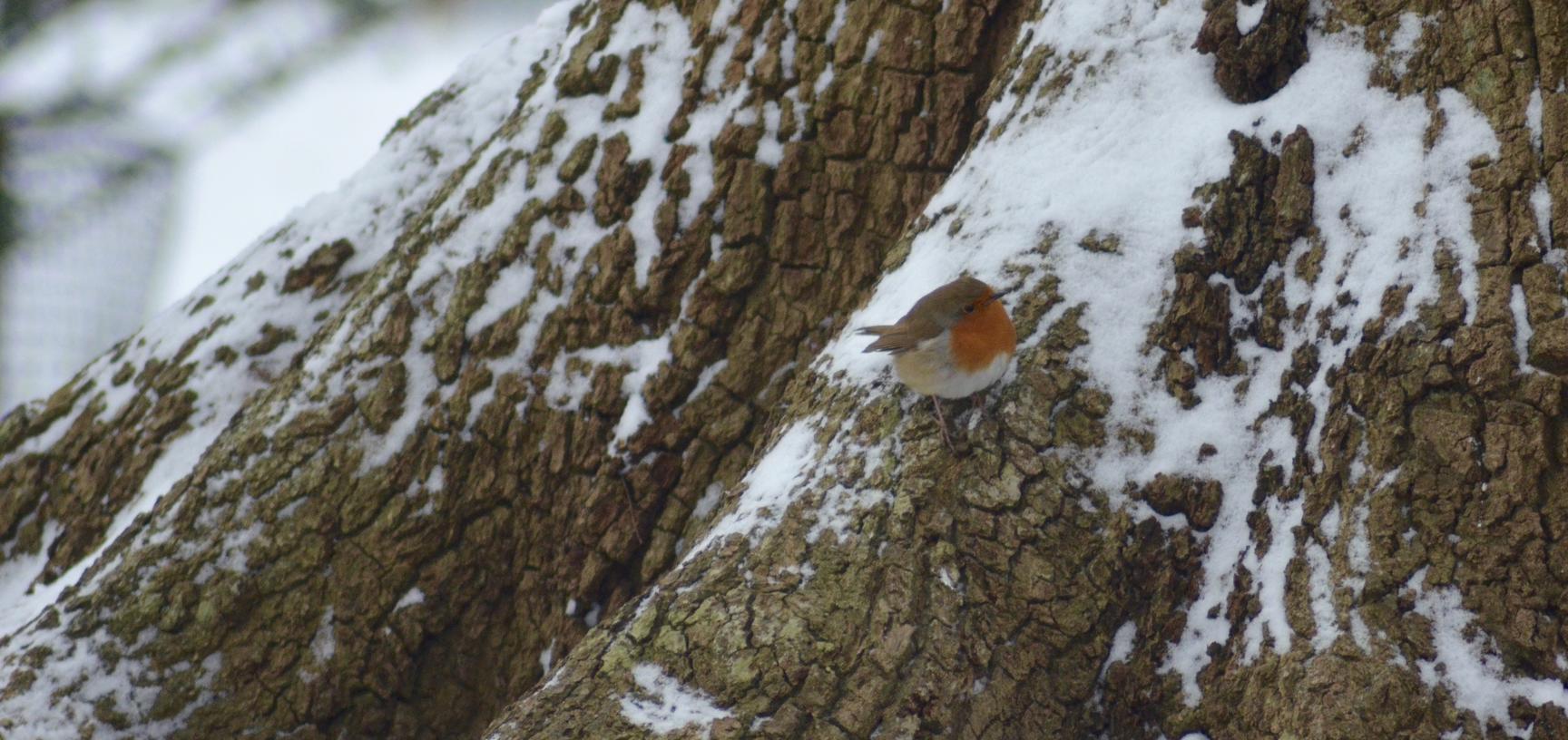 Robin Snow Arboretum