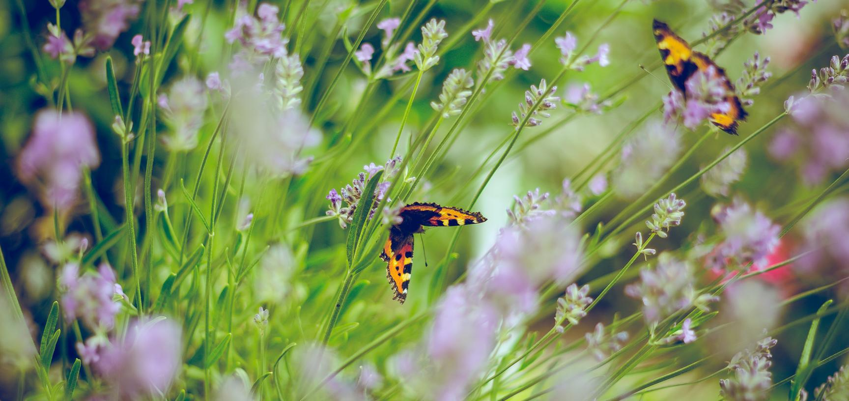 flowers and butterflies photo by emiel molenaar on unsplash