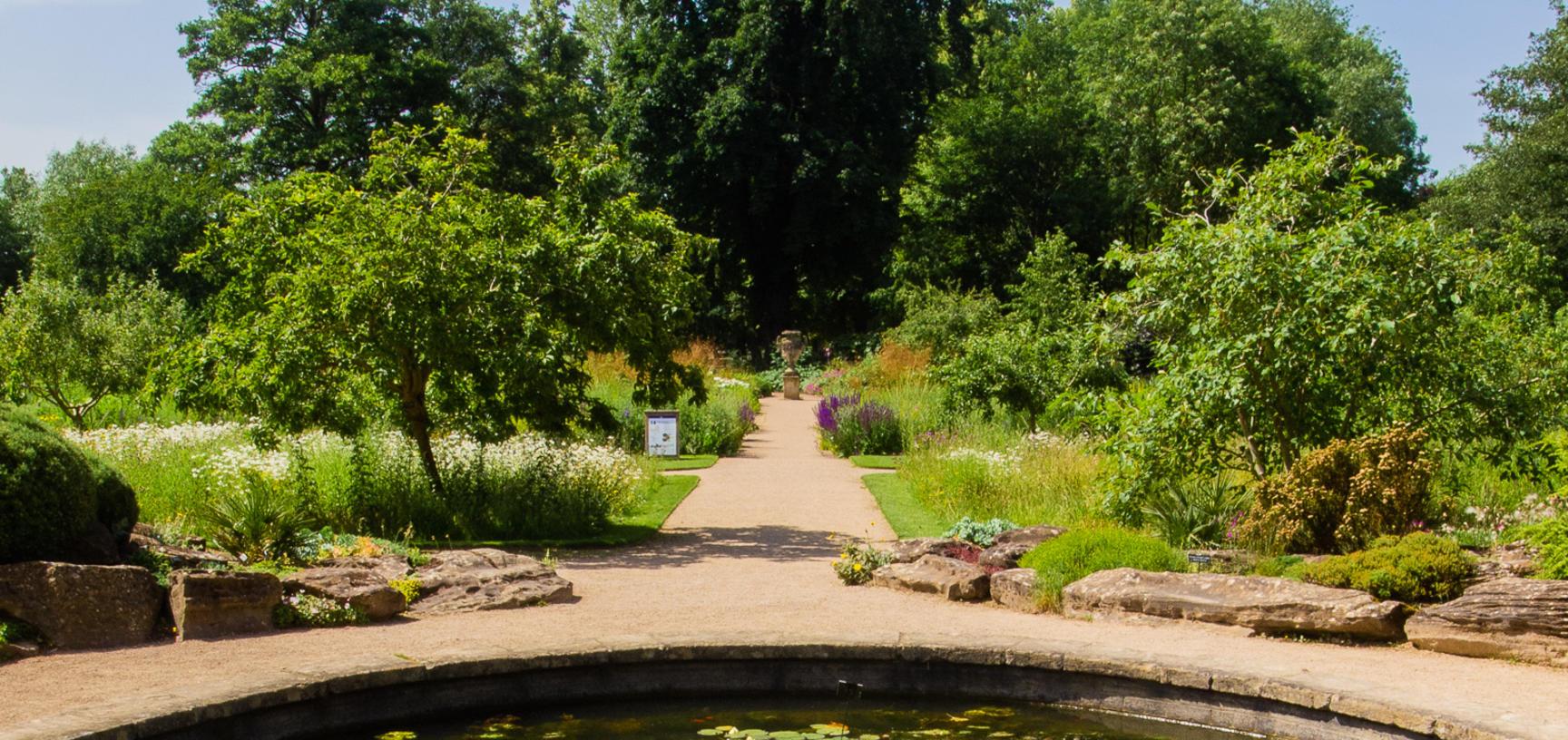 oxford botanic garden  lily pond  lower garden  summer