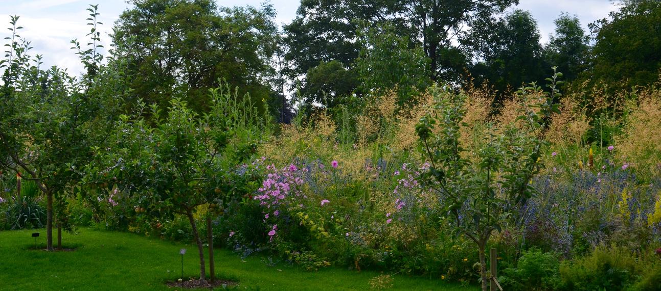 apple trees obg