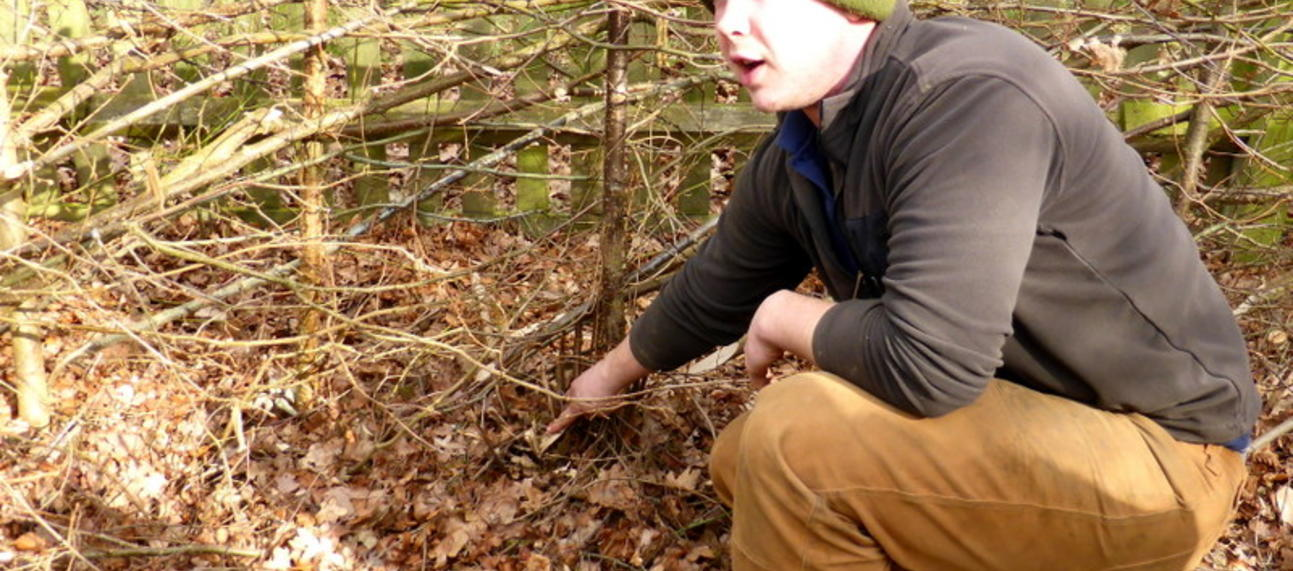 b1 11 hedge laying done by volunteers explained