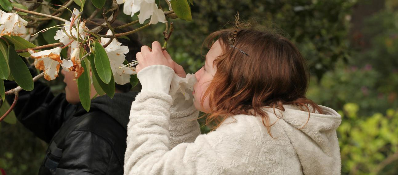 Children smelling rhododendrons
