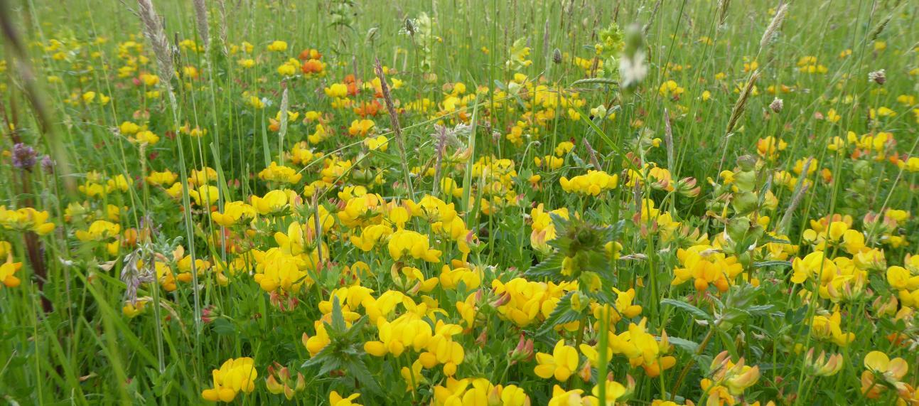 Meadow Arboretum