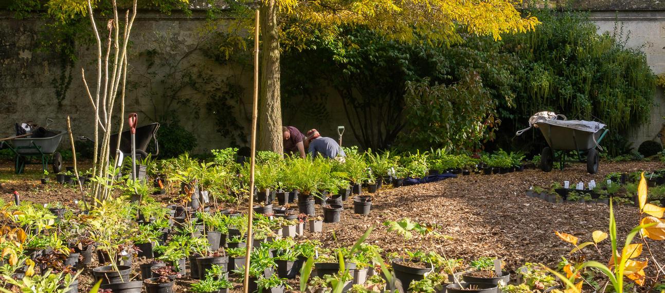 Planting - Literary Woodland - Oxford Botanic Garden