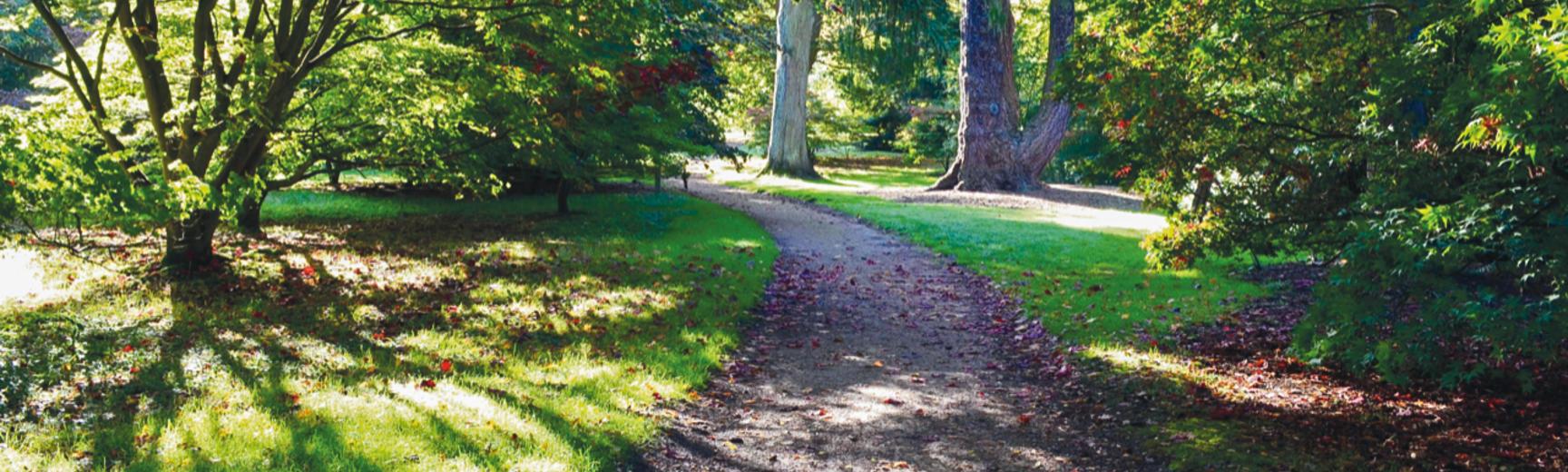 Acer Glade - Harcourt Arboretum