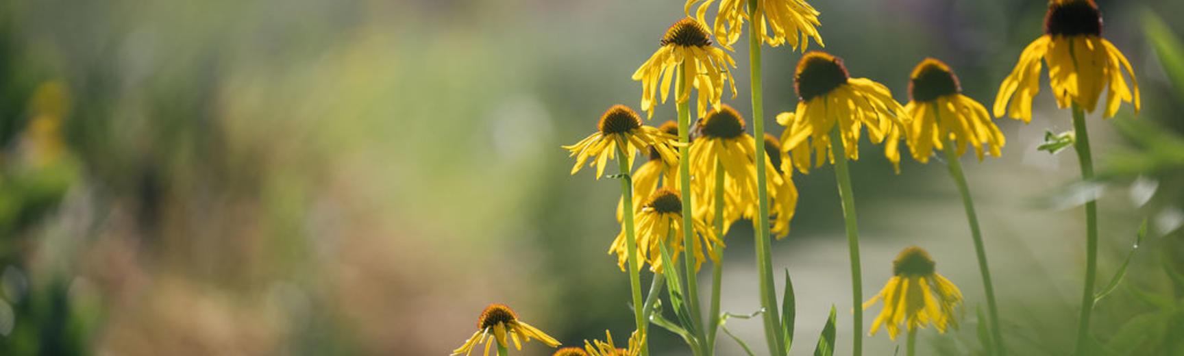 botanicgardensopeningbyianwallman 5204