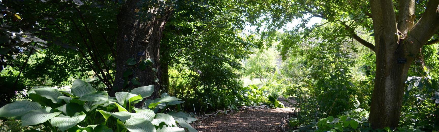 Woodland Walk at the Botanic Garden
