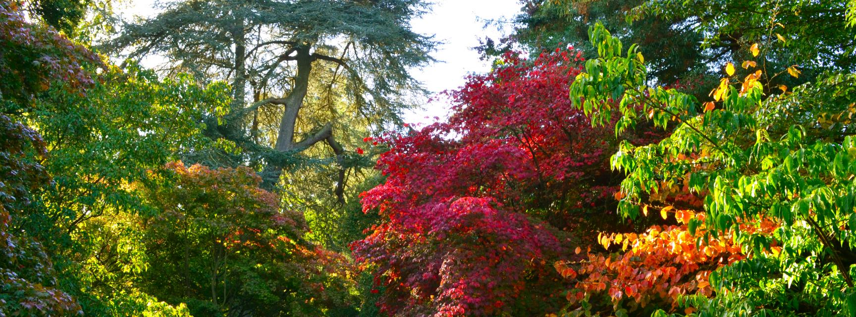 Autumn Colour in the Acer Glade