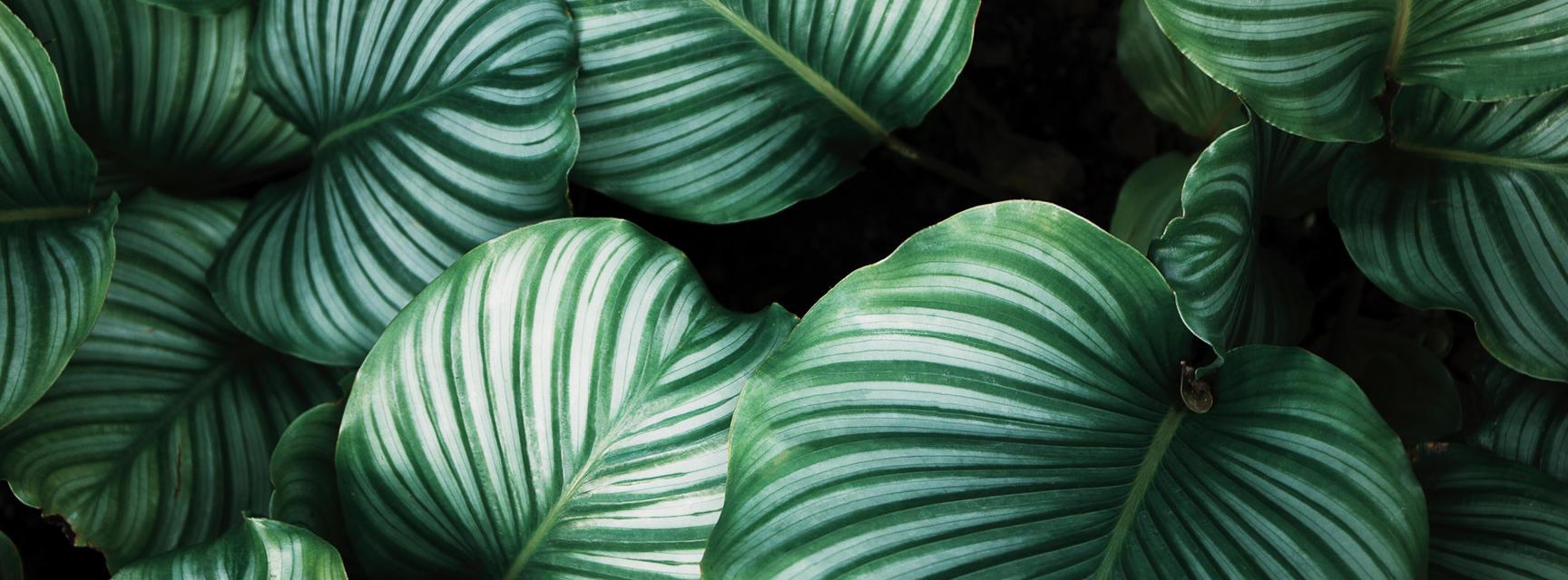 Botanical pattern