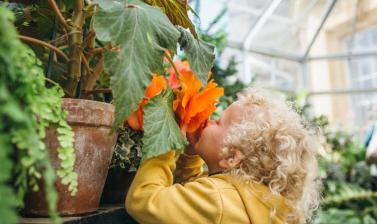 Child in the Conservatory Smelling Flower (Wallman Lo Res)