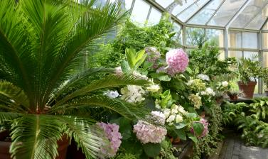 Display in the Conservatory