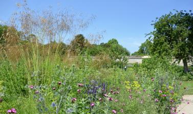 Merton Border in Early Summer
