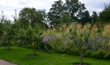 Apple Trees in the Lower Garden