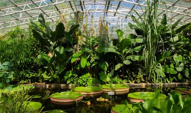 water lily house  botanic garden  summer