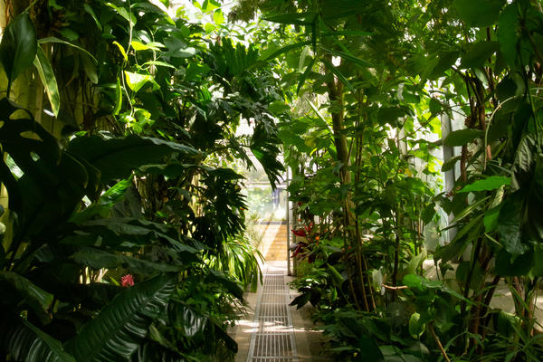 Glasshouse Corridor at Oxford Botanic Garden