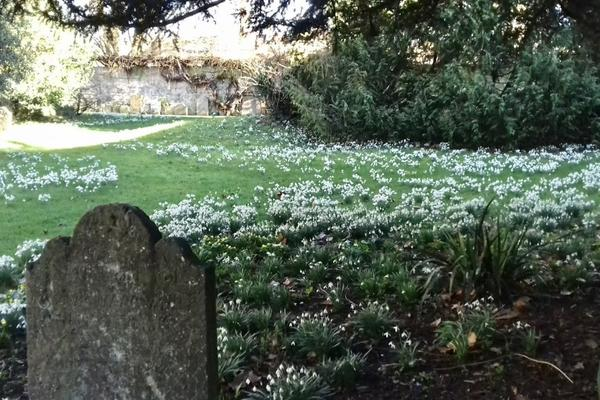 snowdrops at st edmund hall