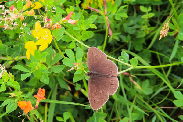 arboretum  butterfly  meadow  img 8904 2