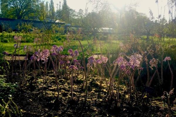 bog garden may