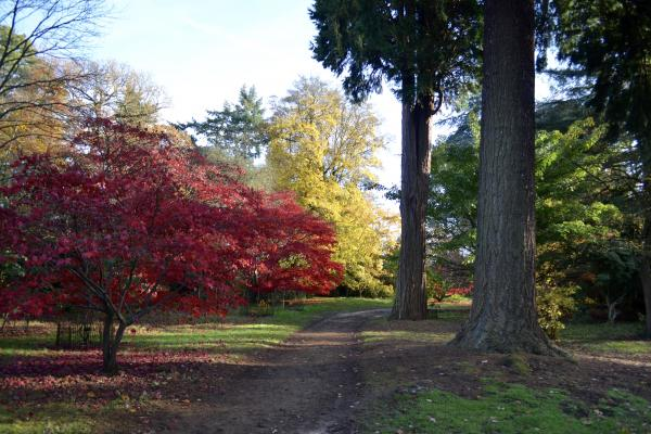 The Acer Glade in late autumn