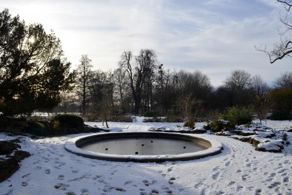Lily Pond and Snow