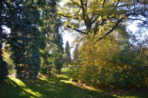 Sunset Arboretum