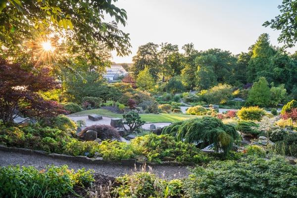 friends visits wisley  the rock garden at sunset