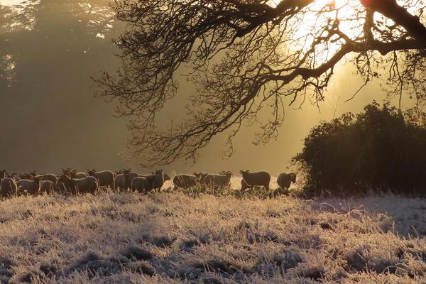 harcourt arboretum winter