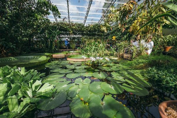 ianwallman lily house high res garden