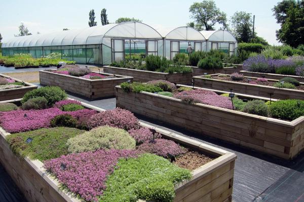 jekkas herb farm