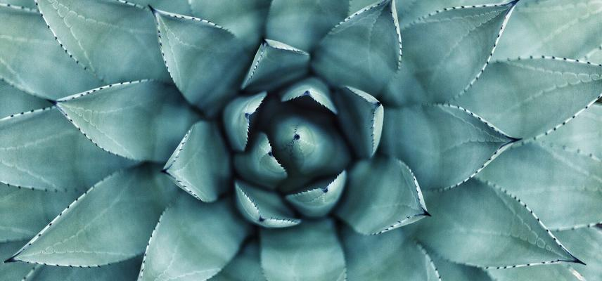 botanical pattern  succulent