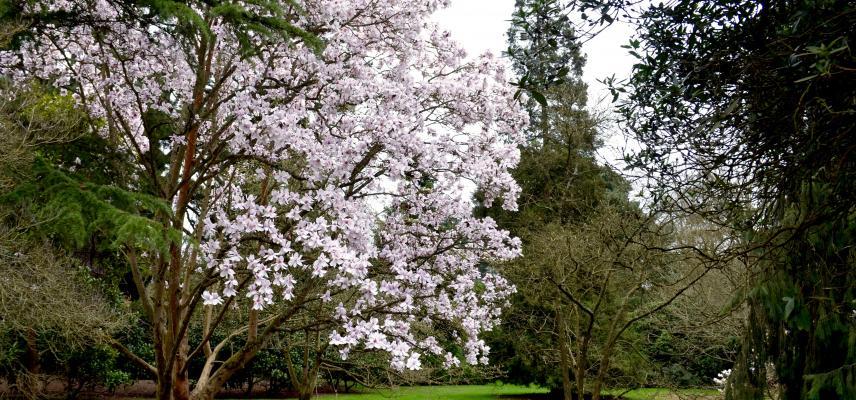 Magnolia Glade in March