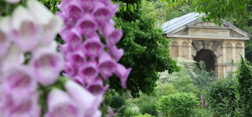 Foxgloves and Danby Arch