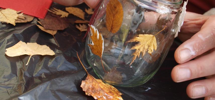 lovely leaves 2015