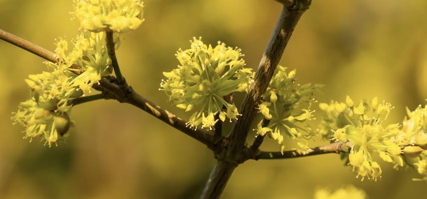 winter flowering plant in the botanic garden