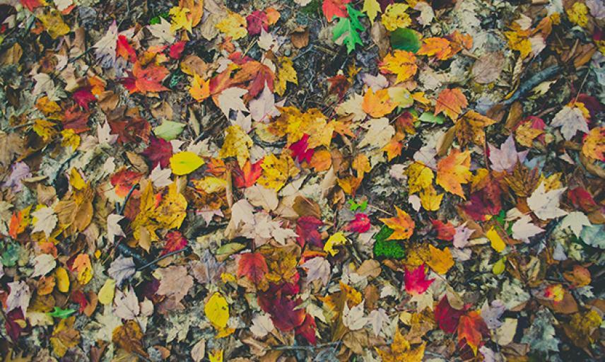 Art in Autumn
