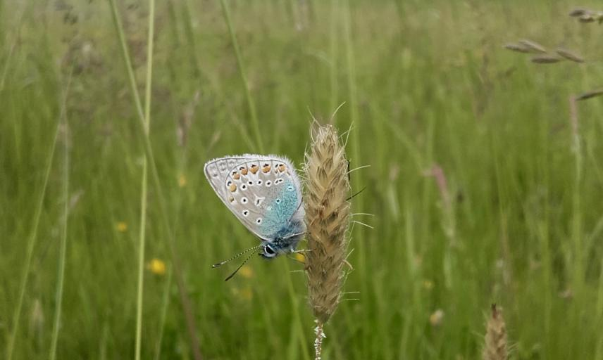 Butterfly in the Meadow