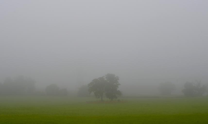 Meadow in Fog
