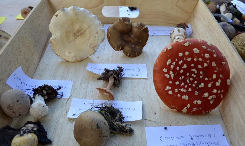 Display at a Fungi Foray