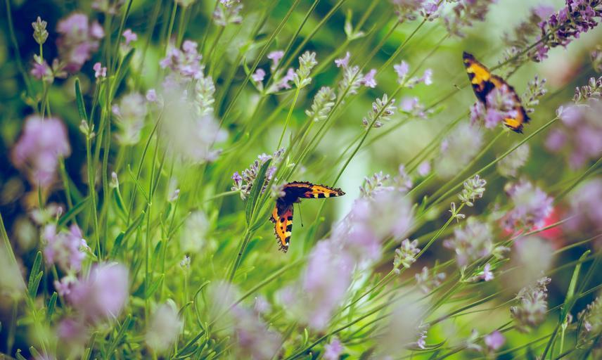 flowers and butterflies photo by emiel molenaar on unsplash