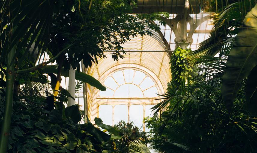 Kew-760141