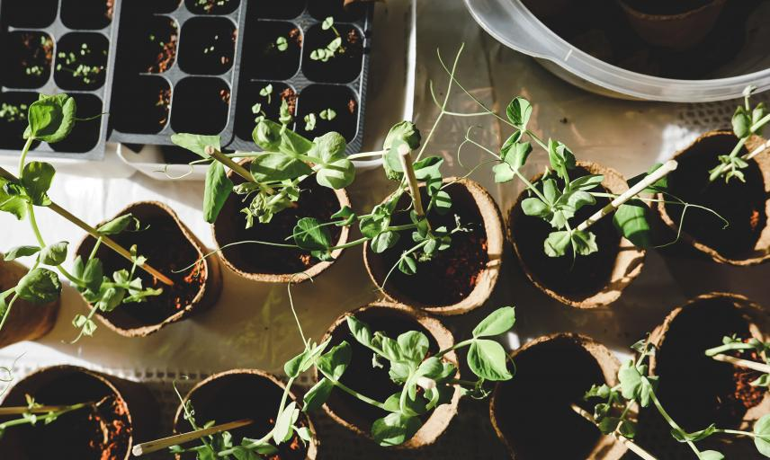 planning for the gardening year ahead